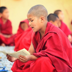 little monk is reading in dharamsala in india