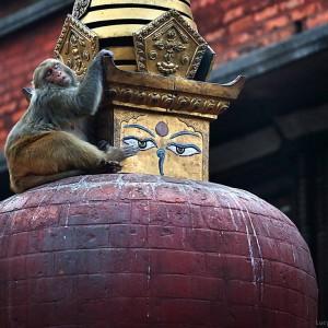 обезьяна и ступа в катманду в непале