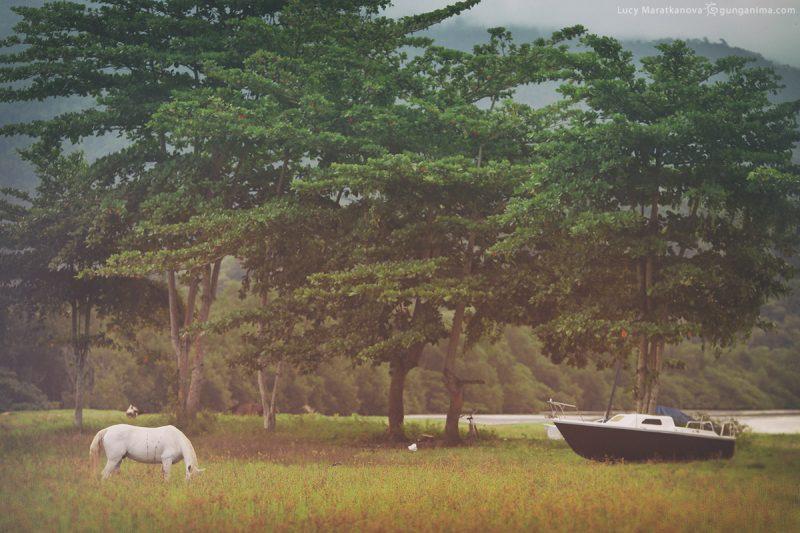 берег жабакуары в парати в бразилии