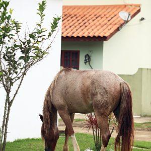 дикие лошадки в парати в бразилии