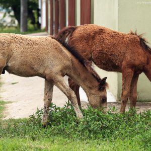 лошади в парати в бразилии
