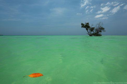 Бирюзовая вода в океане у острова Хавелок Андаманских островов