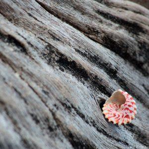 маленькая ракушка на дереве