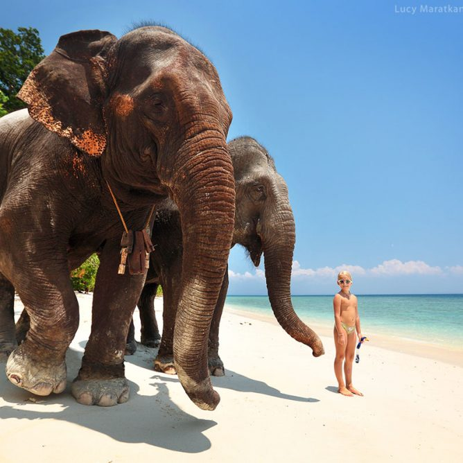 girl is standing near elefants on the shore of havelock island in andaman in india