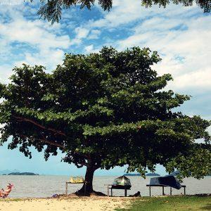 огромное дерево на берегу моря в парати в бразилии