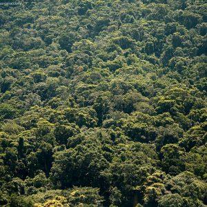 лес в бразилии