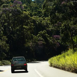 зеленые дороги в бразилии